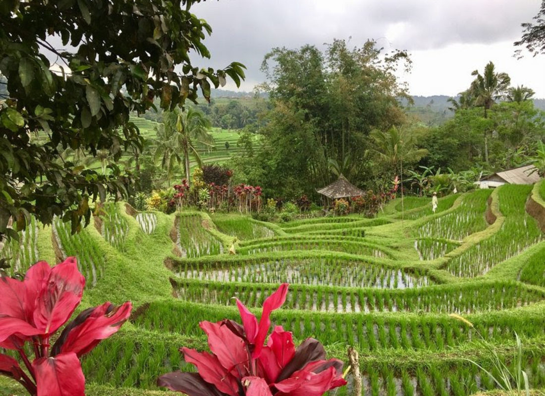 A village in Bali, Indonesia